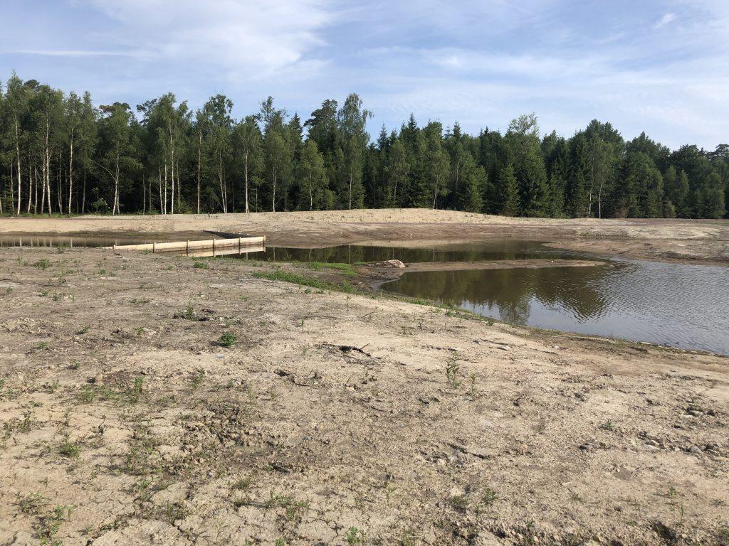Dagvattendammar och våtmarker
